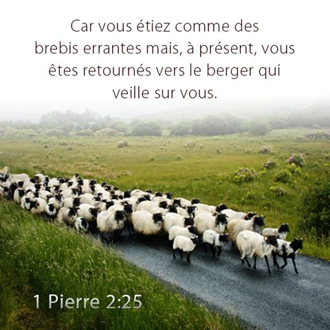 1 pierre 2.25 - 1 Peter 2:25 (MSG)  25  You were lost sheep with no idea who you were or where you were going. Now you're named and kept for good by the Shepherd of your souls.