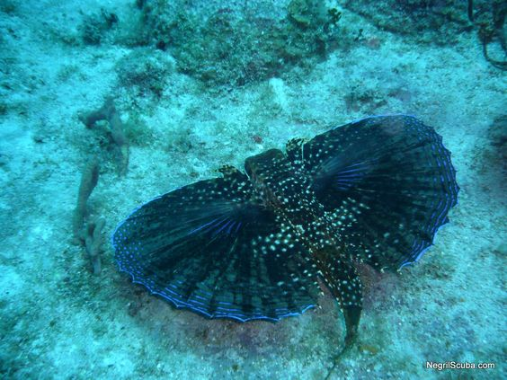 Caribbean Animals: Sea Life And Underwater Animals From