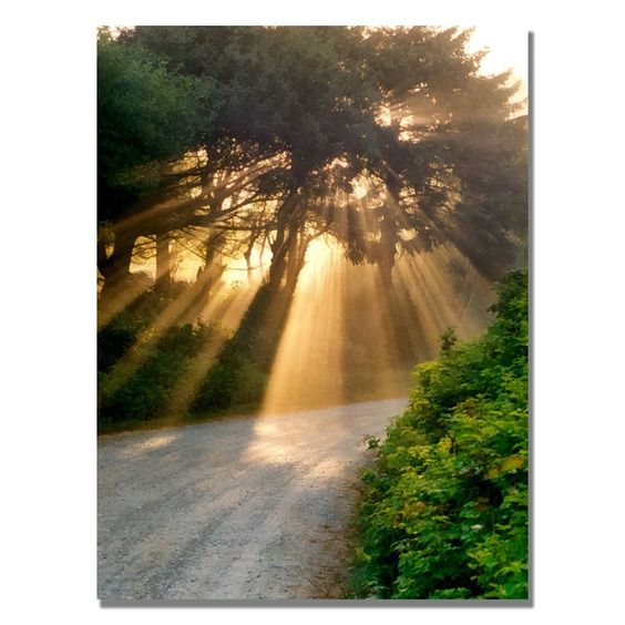 'Sunlight through Trees' by Michelle Calkins Photographic Print on Canvas