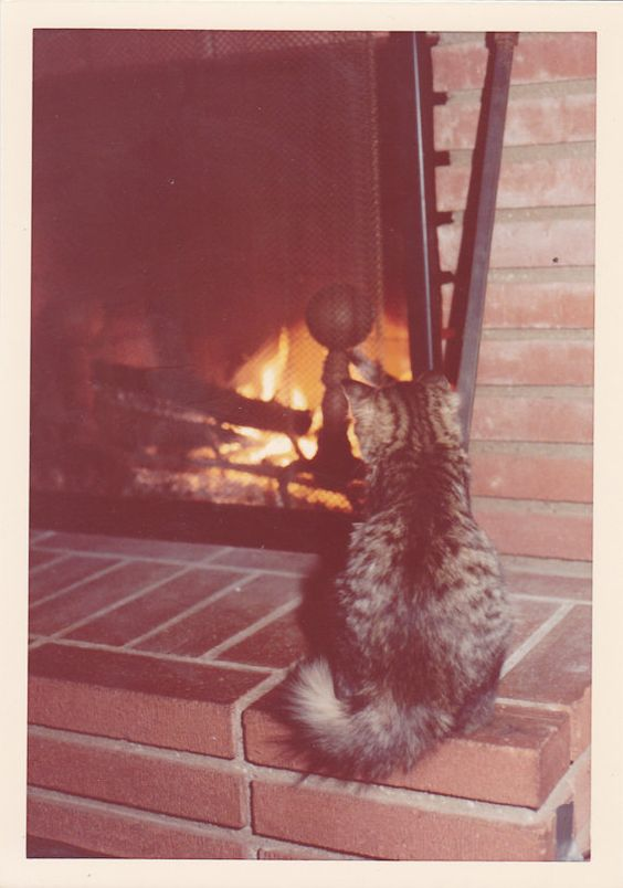 {keeping warm} vintage kitten photo