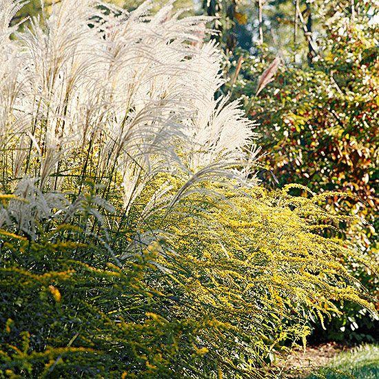 Pinterest the world s catalog of ideas for Short ornamental grass varieties