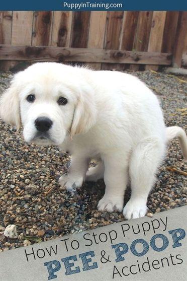 Dog Training Choke Collar Don Sullivan Dog Training Youtube Dog