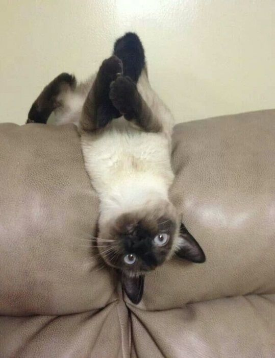 Funny cats that are convenient to everyone | CrazyFunDays - Selection of the best humorous photos and videos on the Internet