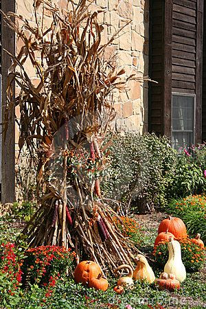 corn stalk display with pumpkins - Halloween Corn Stalks