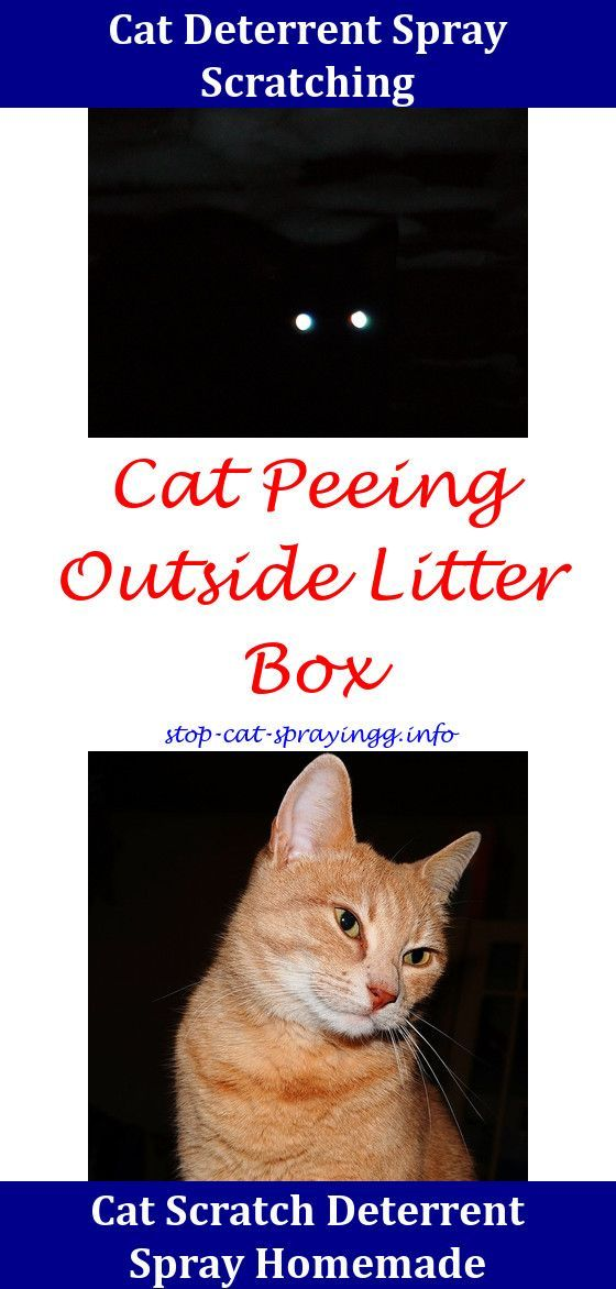 Best Air Purifier For Pets Get Rid Of Awful Pet Odors Cat Pee Cat Pee Smell Male Cat Spraying