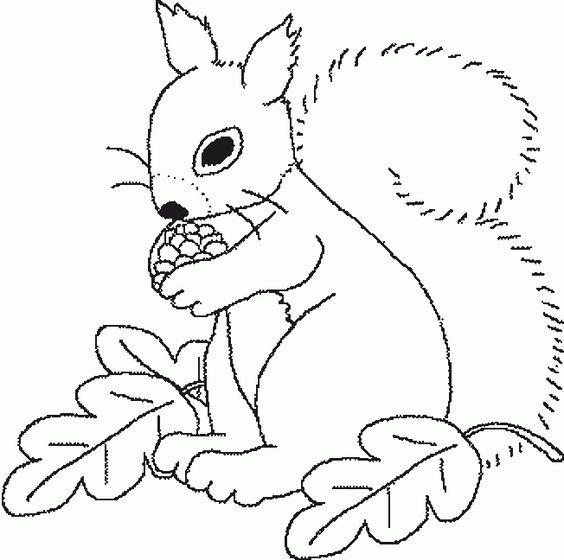 ausmalbild eichhornchen mit nuss  cartoonbild