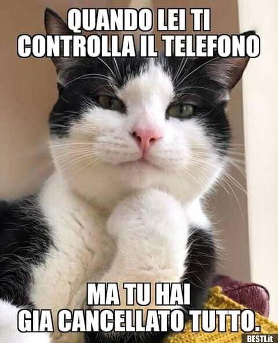 Quando lei ti controlla il telefono | Immagini di gatti divertenti, Foto  divertenti di gatti, Gatti divertenti