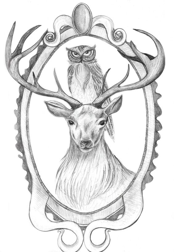 Dessin d 39 un hibou sur un cerf drawing of an owl on a deer - Dessin bois de cerf ...