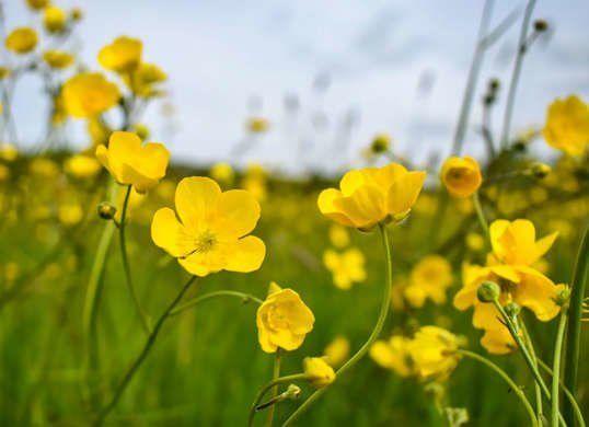 The 25 Most Dangerous Plants For Your Pet In 2020 Common Garden Plants Ranunculus Garden Plants