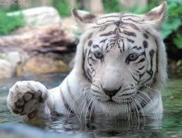 animales exoticos - Buscar con Google