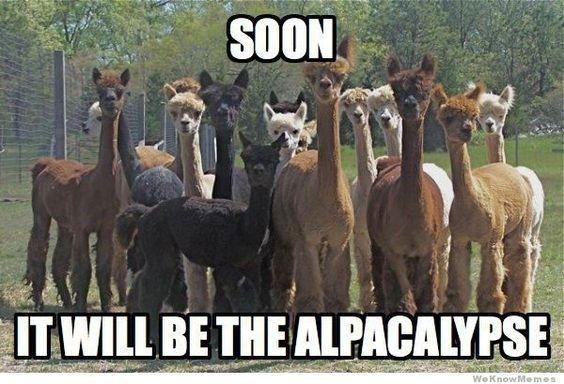 15 Hilarious Alpaca Memes That Will Have You Laughing All Day Alpaca Funny Cute Alpaca Alpaca