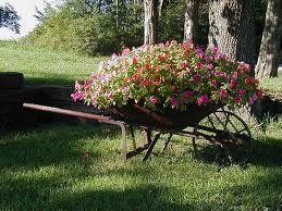 Wheel barrel of flowers