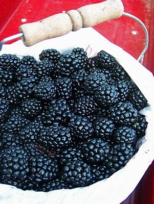 Blackberries...I used to walk out into the woods at my grandma's and pick a Prairie Farms bucket full, and then she'd make a cobbler with them.  Damn.