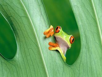 Cute but Real Frogs | thb-cute-little-frog-wallpaper.jpg