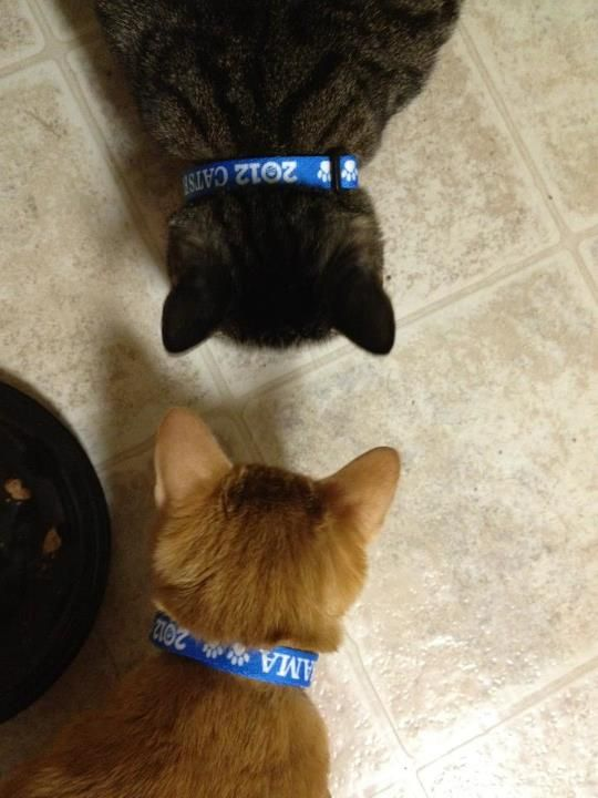 Solidarity. Pick up a collar for your cat here: http://OFA.BO/as73Ww