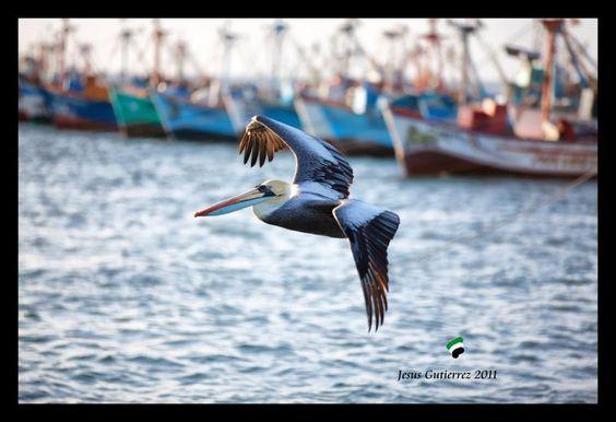 Playa El Chaco - Paracas, PERU  (foto: Jesus Gutierrez)