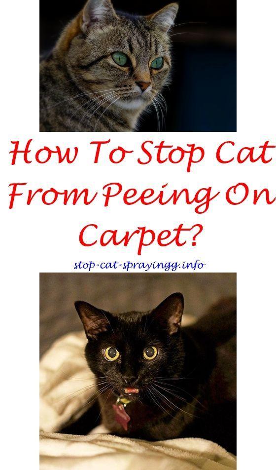 Spray To Stop Cats Urinating Cat Stop Spray Natural Cat Urine