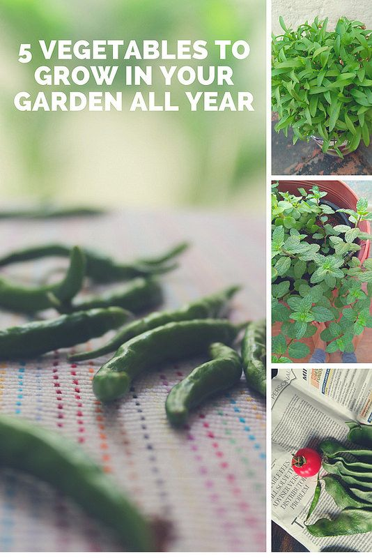 5 Super Easy Vegetables To Grow In Pots All Year Easy
