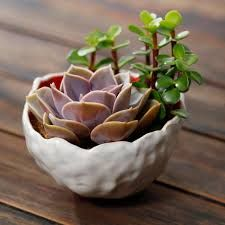 Image result for succulent pottery