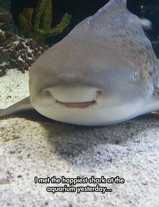 The Happiest Shark Sharks Funny Happy Shark Cute Shark