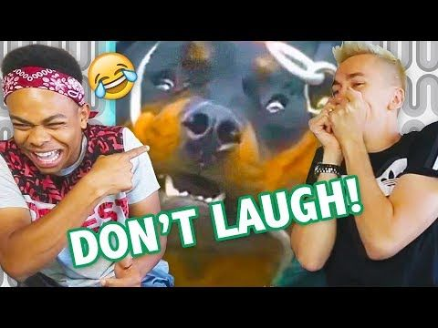 Try Not To Laugh Its Challenge Impossible Hardest Version Try Not To Funny Quotes For Kids Funny Baby Memes Fun Quotes Funny