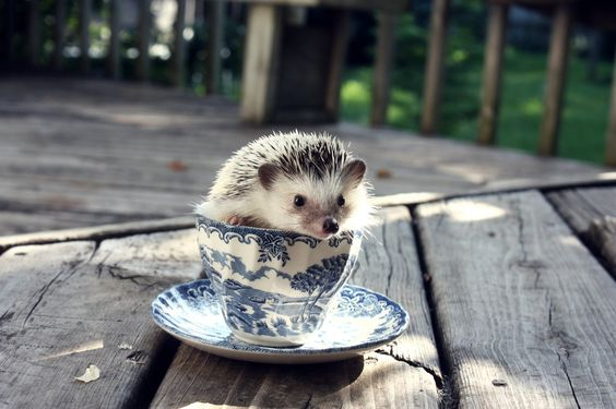 #TEACUP Hedgehog