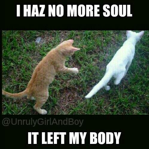 Cat meme, soul