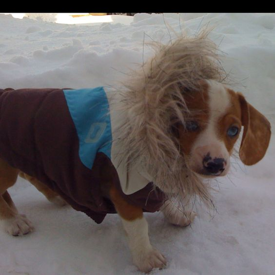 Kalea playing in snow!