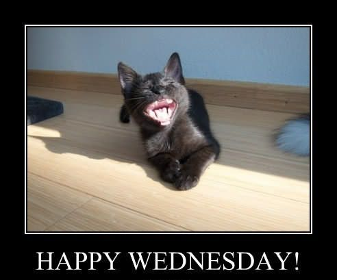 26 Best Happy Wednesday Memes Funny That Makes You Laugh Happy Wednesday Funny Memes Wednesday Memes