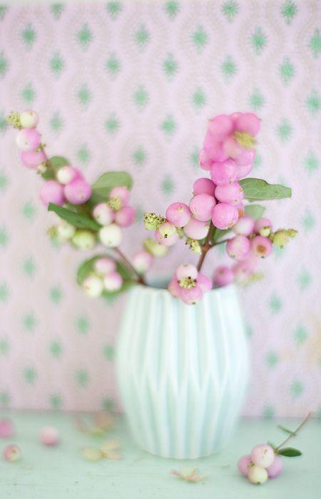 rosa knallerbsen wunderschoen-gemacht