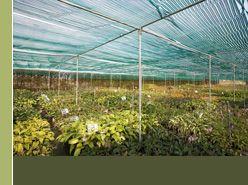 Vaste planten - PAEONIA (Pioen) - Vaste plantenkwekerij Guido Van de Steen