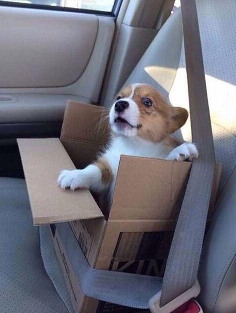 車に乗るかわいい子犬