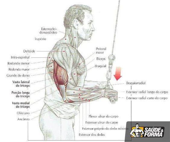 . Inclua a barra fixa (com pegada curta e com as palmas das mãos viradas para você) no treino de costas. Este exercício além de ser efetivo para as costas, também exige consideravelmente o bíceps, tendo o benefício de ser um exercício composto. 2. Tenha certeza de estar fazendo paralelas no treino de tríceps e/ou peitoral.
