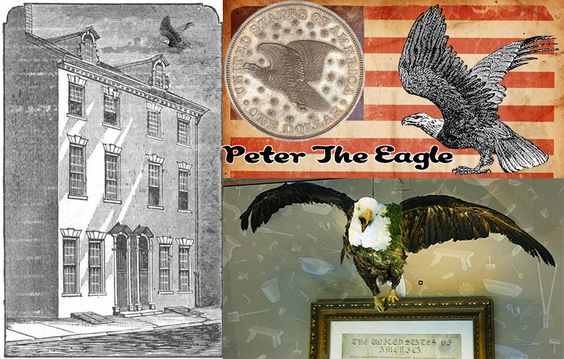 """Did You Know...  The early U.S. Mint in Philadelphia had a Mascot which was a proud Bald Eagle, Named """"Peter""""  It is said that Peter was used as the model for the image of an eagle on the American eagle design, found on the reverse of the dollars issued from 1836 to 1839… and also used on the Flying Eagle cents from 1856 to 1858.  Today, some 180 year later, Peter the Mint Eagle's stuffed body is on display in the lobby of the current Philadelphia mint in Philadelphia."""