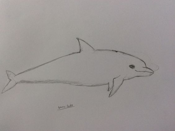 This is my drawing of a Dolphin.