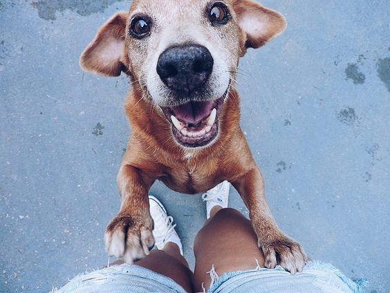 Felicidade é esse cachorro 💖