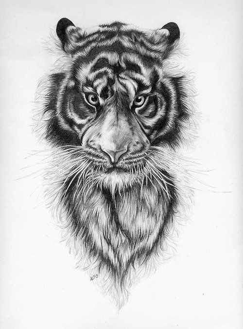 how to draw tigers on grid paper