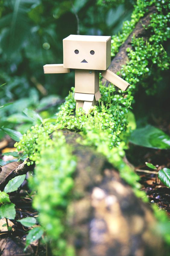 My Photographic Project Of The Famous Danbo   Bored Panda