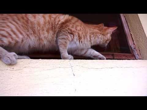 My cat LUCI fail to catch little  Bird