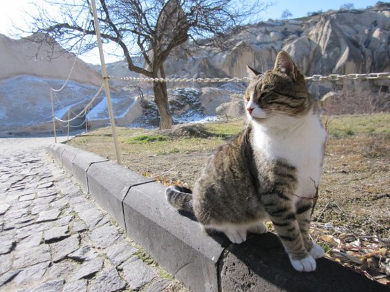 Cat spots: A bucket list of travel destinations for cat lovers
