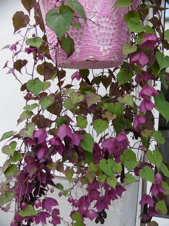 exotische pflanzen gartenideen exotische blumen pflanzen pinterest. Black Bedroom Furniture Sets. Home Design Ideas