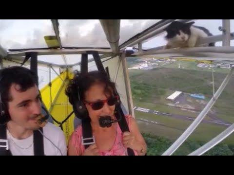 Katze auf Flugzeugflügel - Cat on Airplane Wing