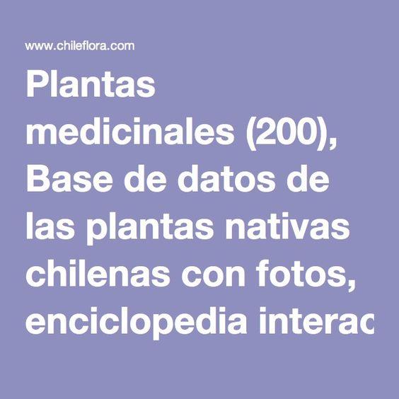 Plantas medicinales (200), Base de datos de las plantas nativas chilenas con fotos, enciclopedia interactiva, herbario de plantas vivas, presentado por Chileflora, su proveedor de semillas de plantas nativas.