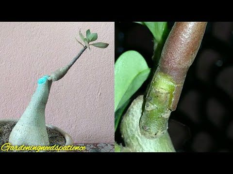 Youtube Cherry Tree Growing Cherry Trees Fall Garden Vegetables