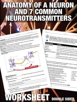 Parts of a Neuron and 7 Common Neurotransmitters Worksheet ...