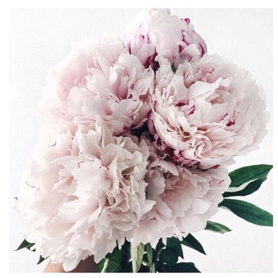 Sunday bloom inspiration