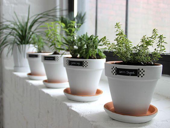 Modern White Minimalist Easy Windowsill Herb Garden