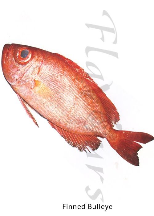 Confused Over Fish Names Finned Bulleye Fish Finding Difficulty Recognizing Fishes In The Market Confused Over Fish Names Identi Fish Sea Fish Over Fish