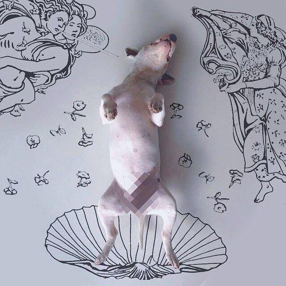 Bull Terrier...Venus