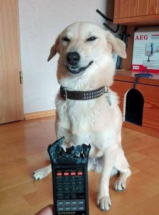 He wasn't even remotely sorry... 😂 😂
